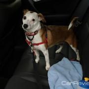 Tessa enjoys riding in the Acura TSX Sport Wagon